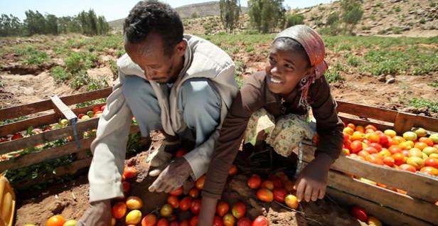 Image - Enterprises Designed to Serve the Smallholder Farmer