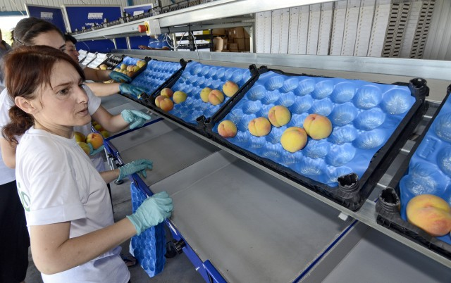 Image - Success Story: New Cash Market for Fruit and Vegetable Growers