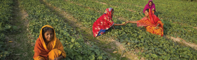 Image - Agro-Inputs Project