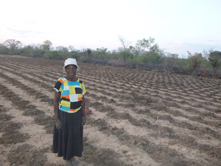Image - Conservation Farming Leads to a Better Harvest in Tsholotsho